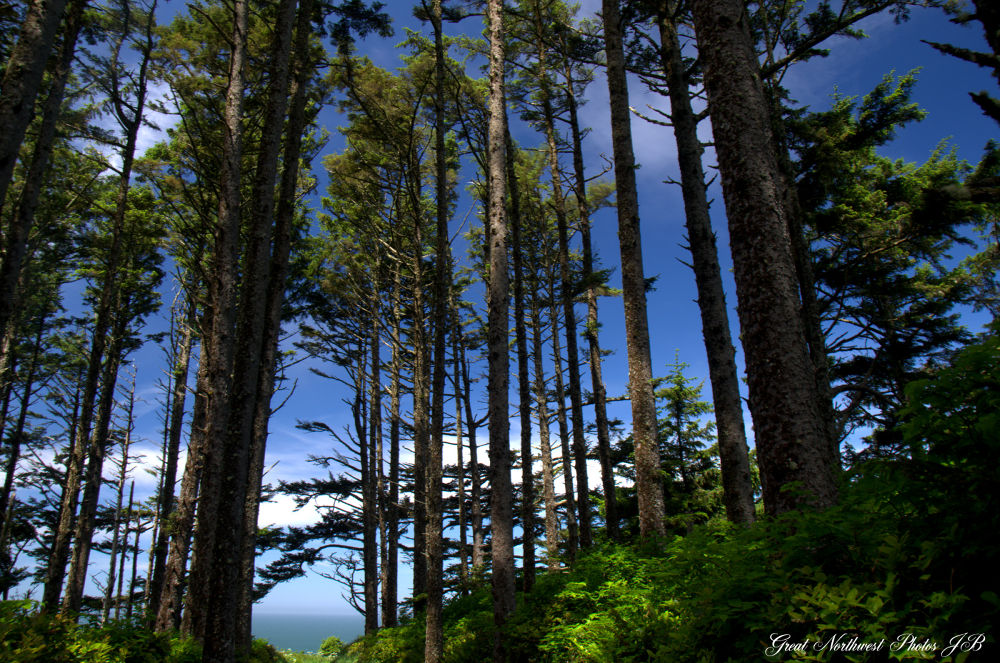 Tall Trees by Judy Brewer