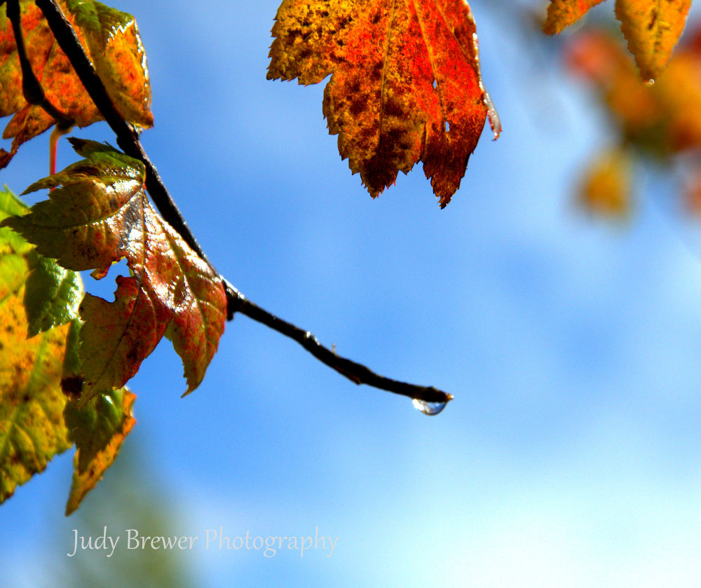 Untitled by Judy Brewer