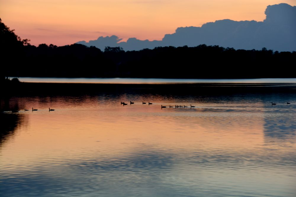 Sunset with ducks by boricua_ms