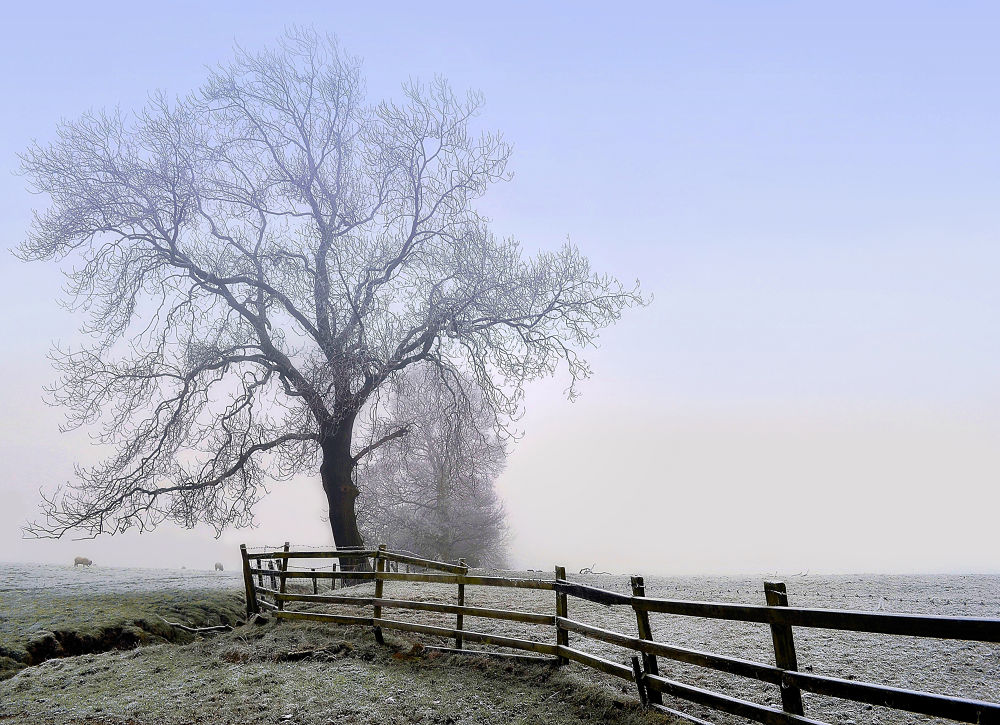 In the Bleak Mid Winter... by Denise Maria