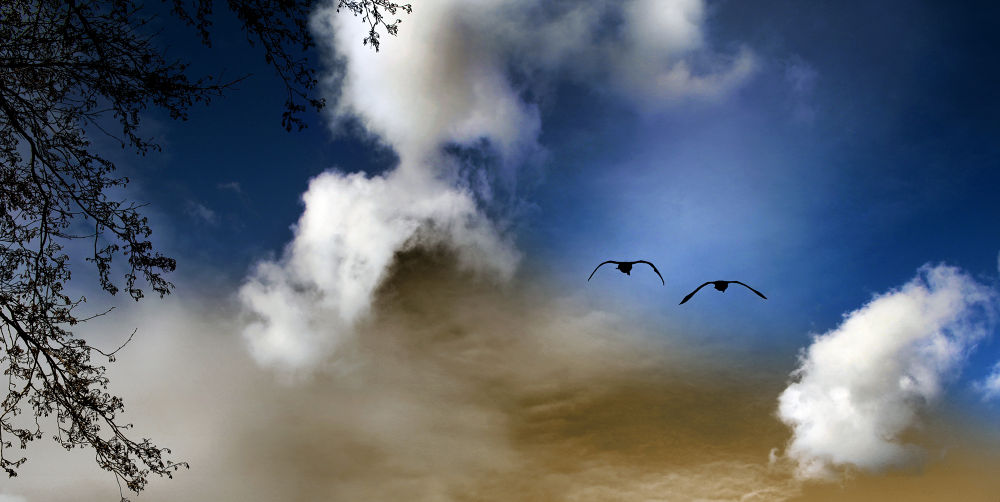 Lets Fly Away... by Denise Maria