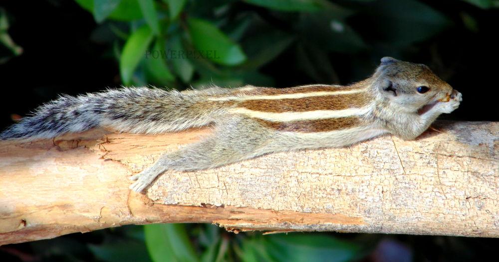 sleeping beauti by Mukesh Kumar Dangi