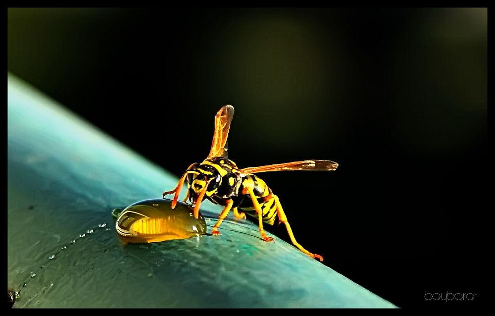 hornet by baybora