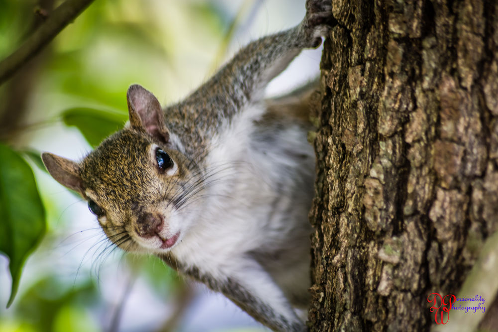Squirrel (1 of 1)-5 by Dawin Welch