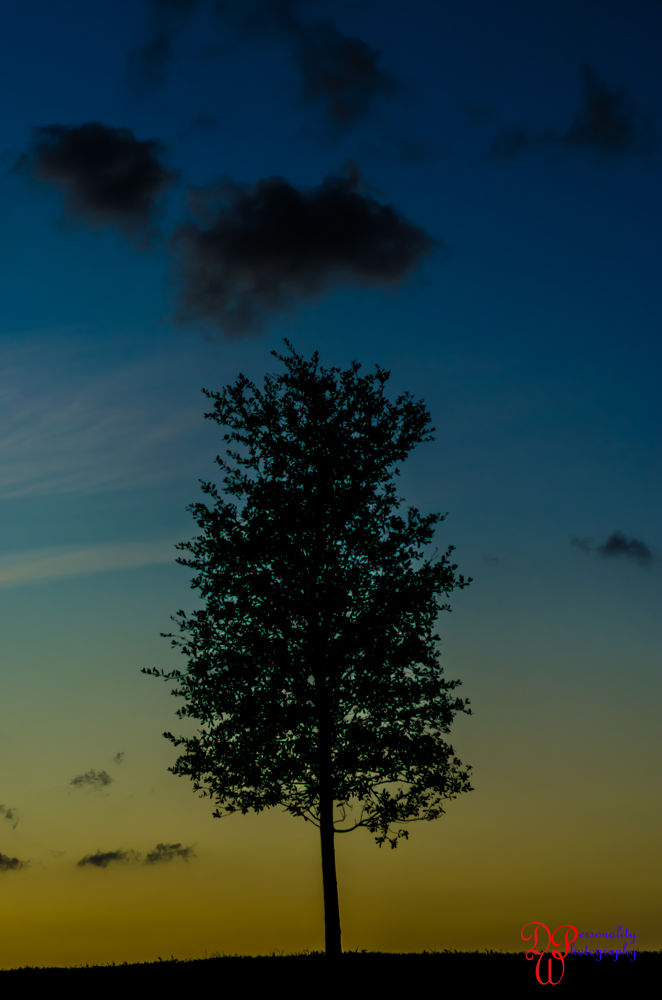 tree (1 of 1) by Dawin Welch