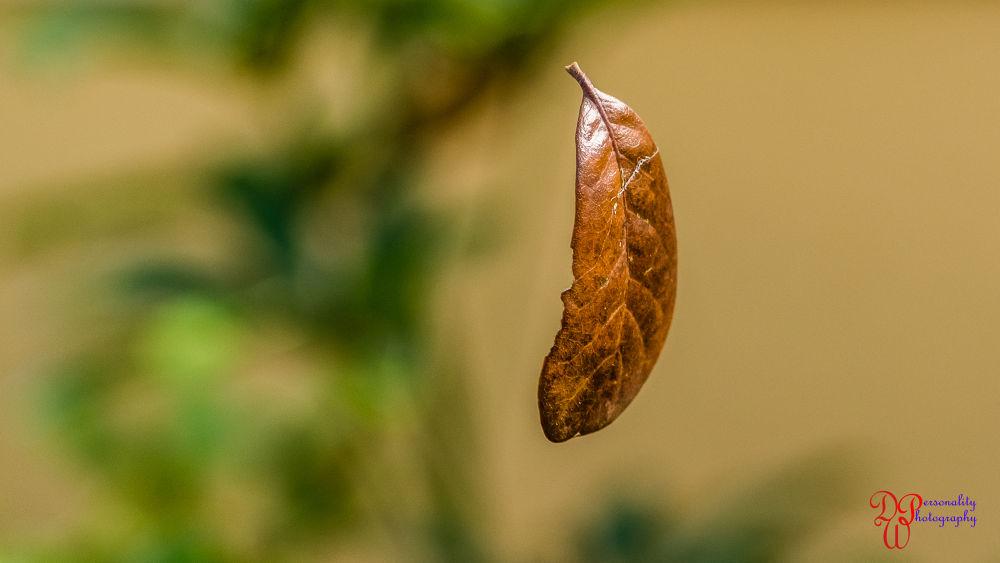 leaf (1 of 1) by Dawin Welch