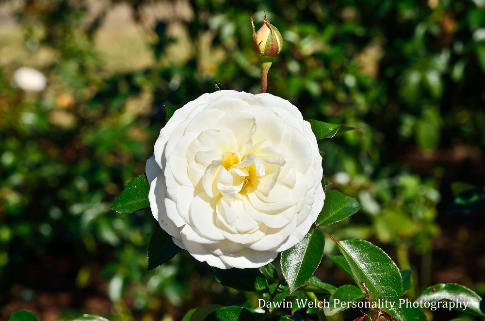 flower (1 of 1) by Dawin Welch