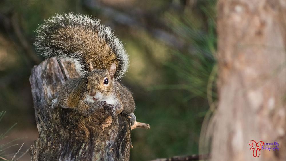 Squirrel by Dawin Welch