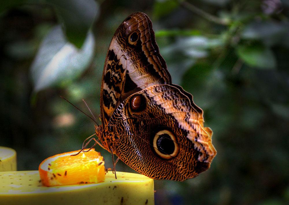 butterfly by zbych41