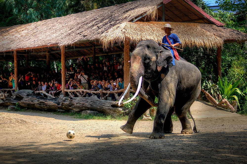 Thai school for elephants by zbych41