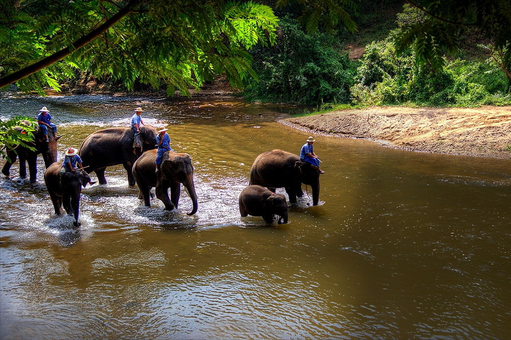 Thai school for elephants by zbych41