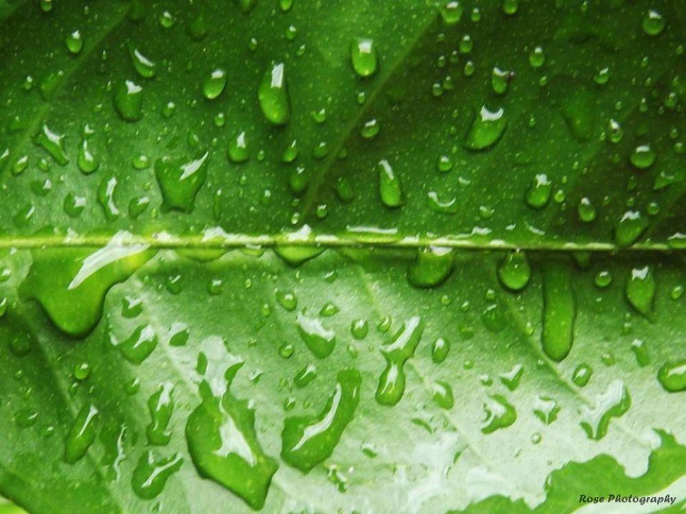 Rainy day .. by Rosee warda