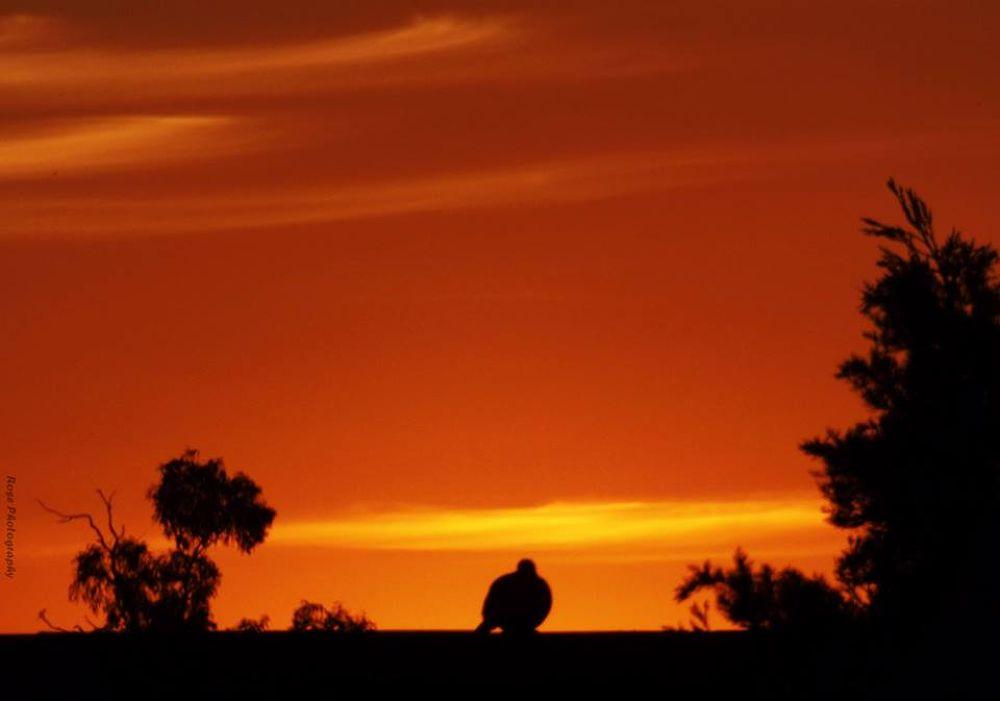 Sunset :) by Rosee warda