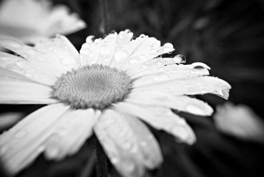 in the garden by ellie dawson