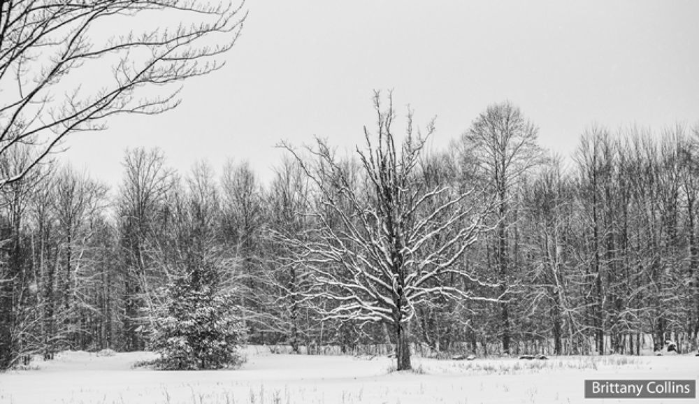 Winter Wonderland January 2014 by Brittany Collins