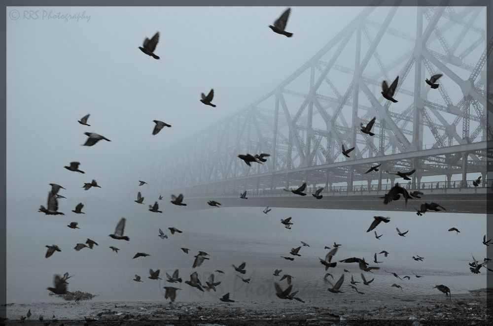 A Foggy Winter Morning by Ritesh Sett