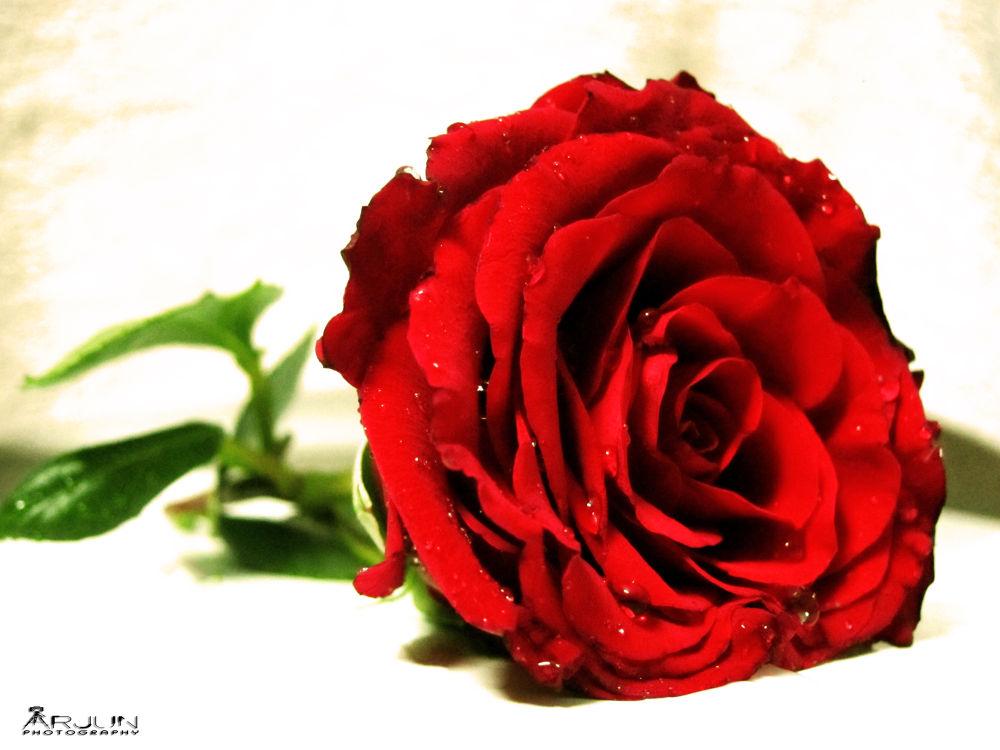 Red Beauty  by Arjun