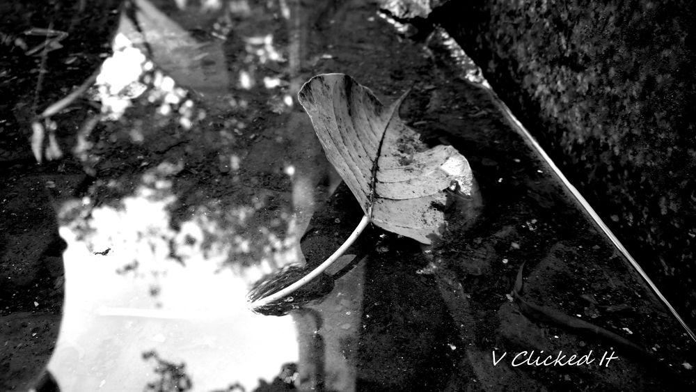 DSC01314-001 by Vikrant