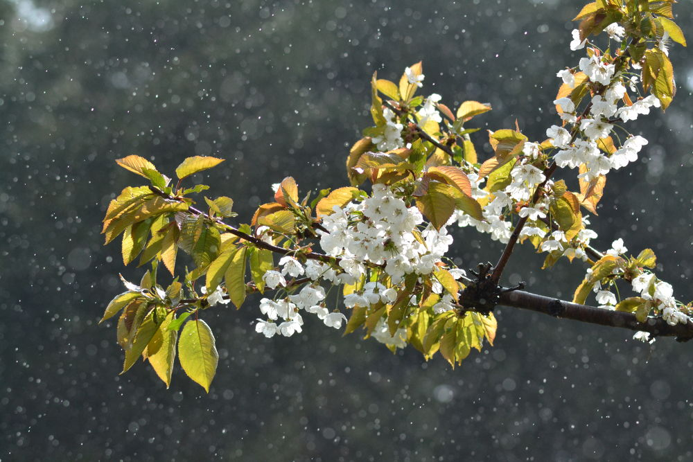 Spring Rain by SW Photography