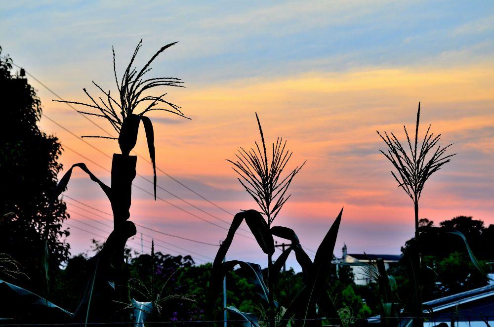 Pôr-do-sol by Nathálya Shinoda