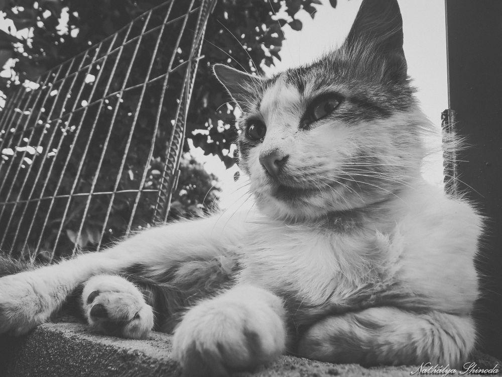 Cat B&W by Nathálya Shinoda
