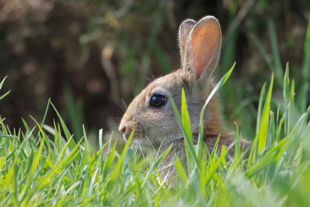 Bunny head by Gary Fox