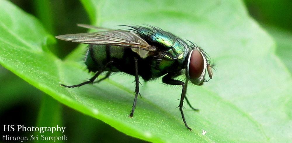 Fly by Hiranya Sri Sampath