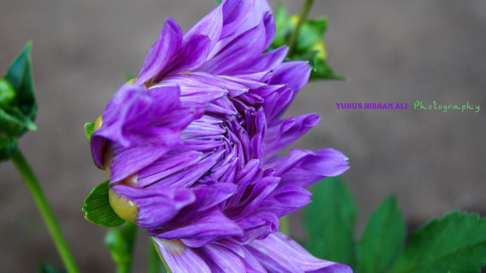ooty flower show by YUNUS HISHAM ALI