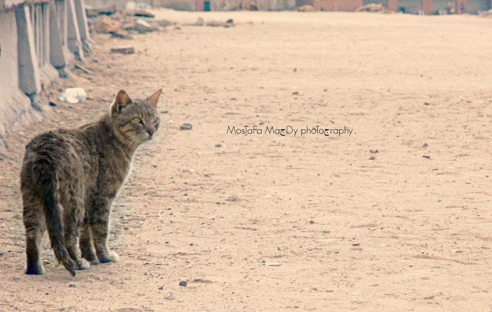 MostaFa MaGdy photography by Mostafa Magdy II