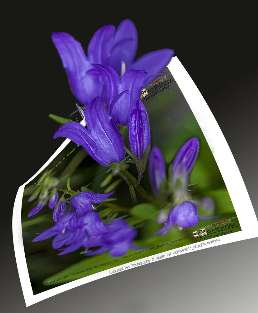 flower 3A by guruhindustani1