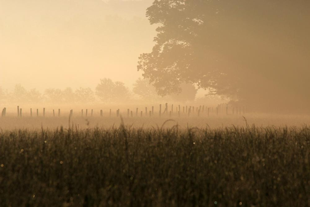 Fog and Sunshine by OneLaneRoadPhotography