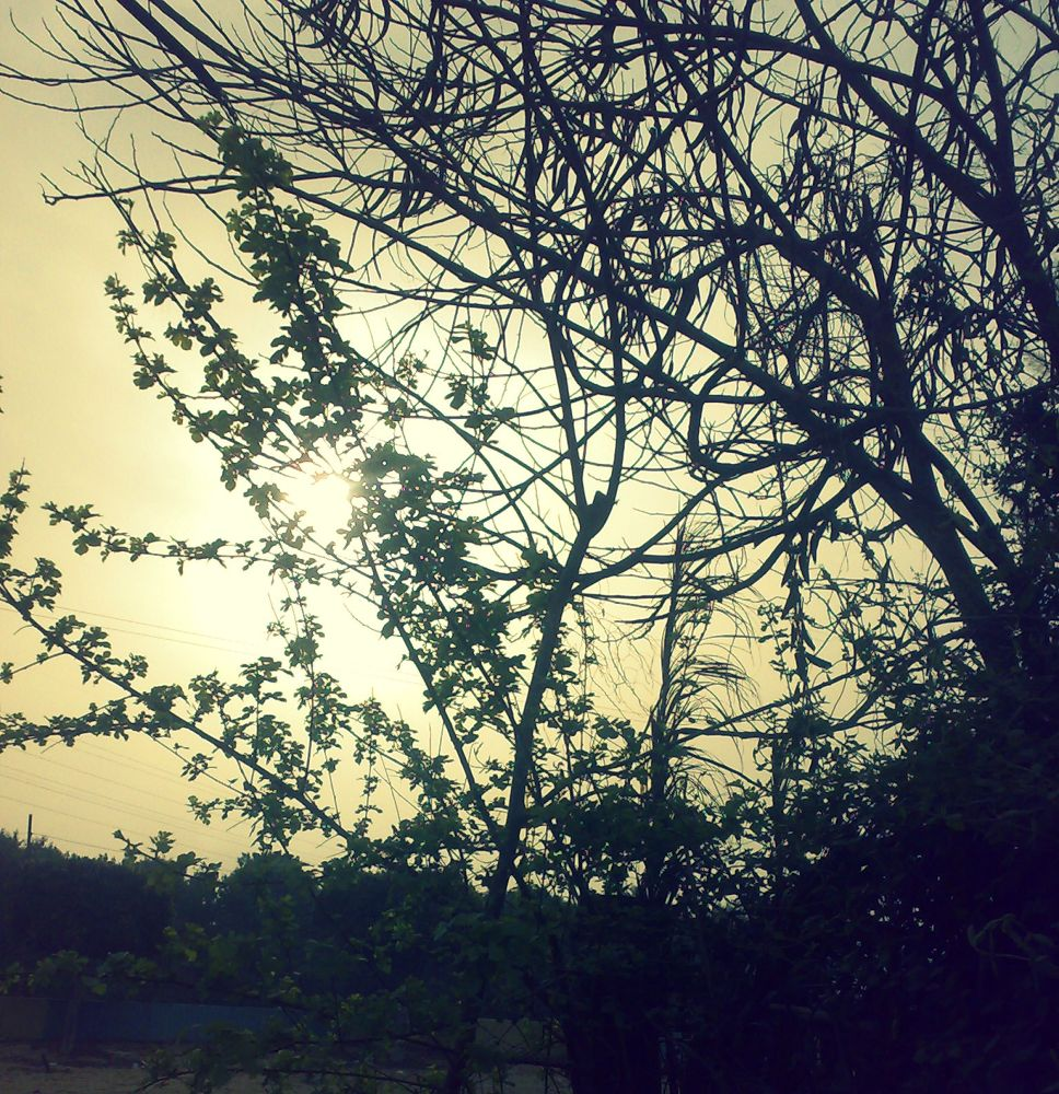 Sunrise  by Nashwa Murad