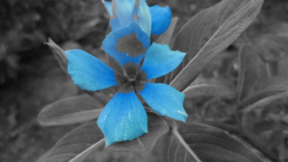 Flower by Nashwa Murad