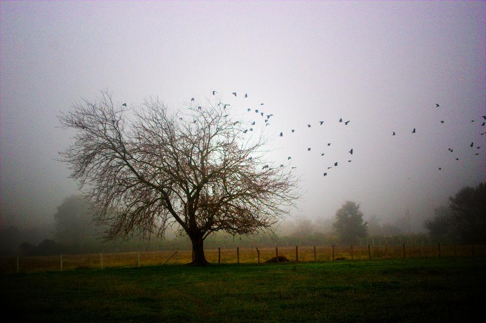 vrane  by Milos Jacimovic