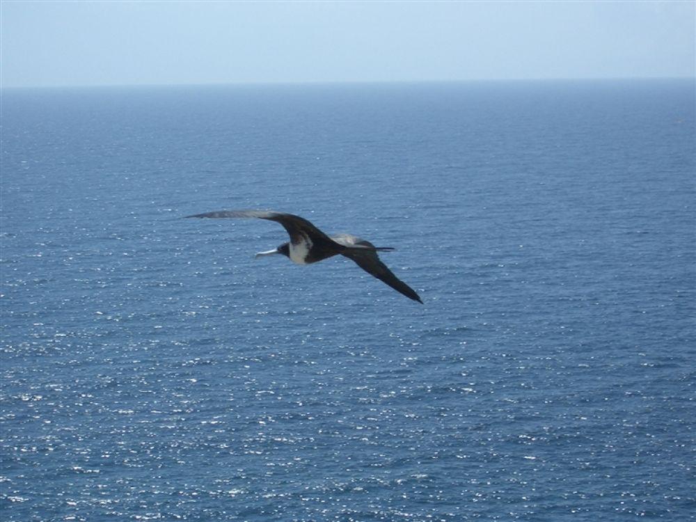 Photo in Random #isla #margarita #de #bird