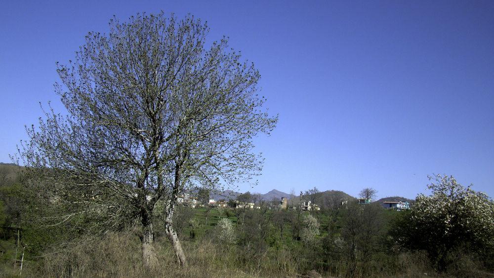 tree by Vishal Sharma