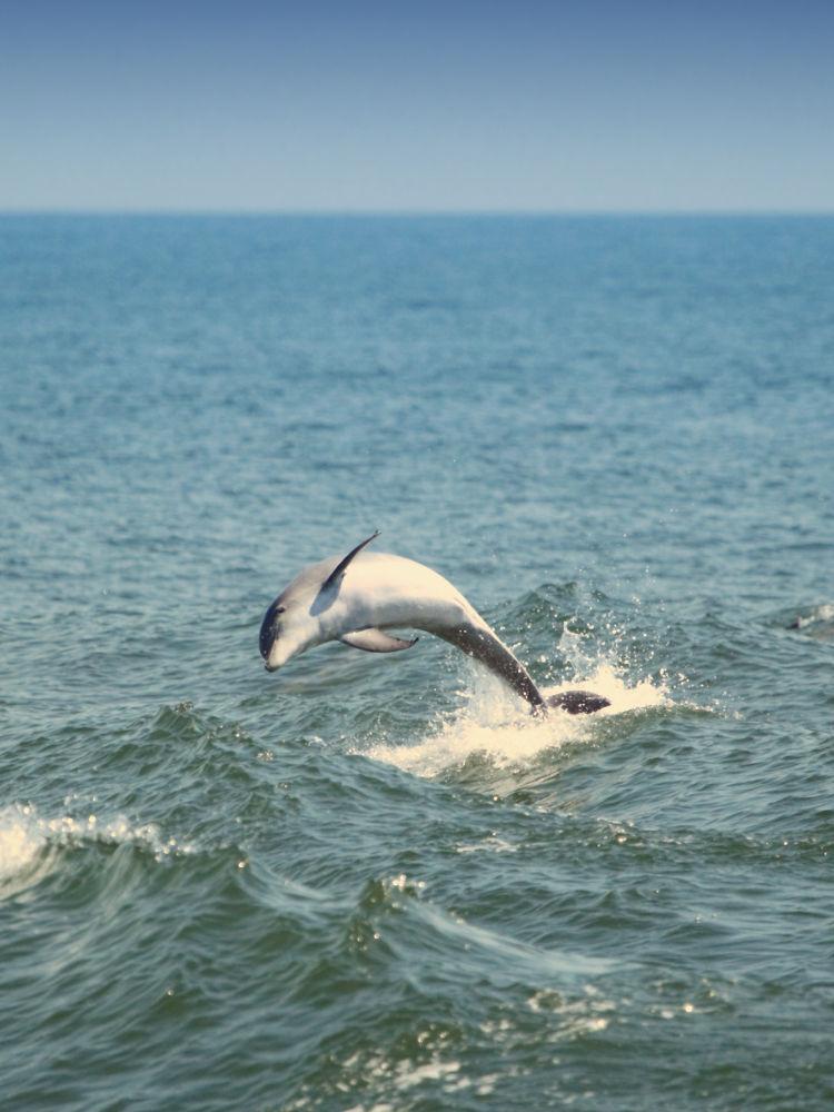 Dolphin Breach #2 by Pete Federico