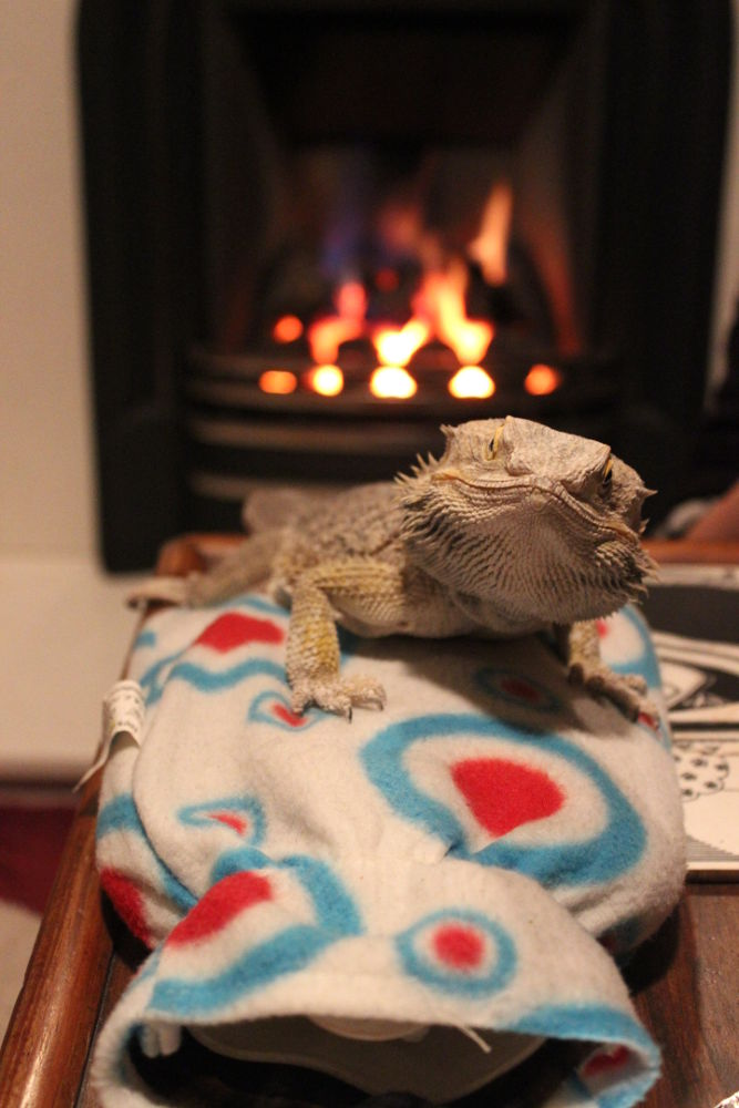How does a Dragon keep warm in the winter?????   With a hot water bottle and an open fire of course by Daryl Marlow