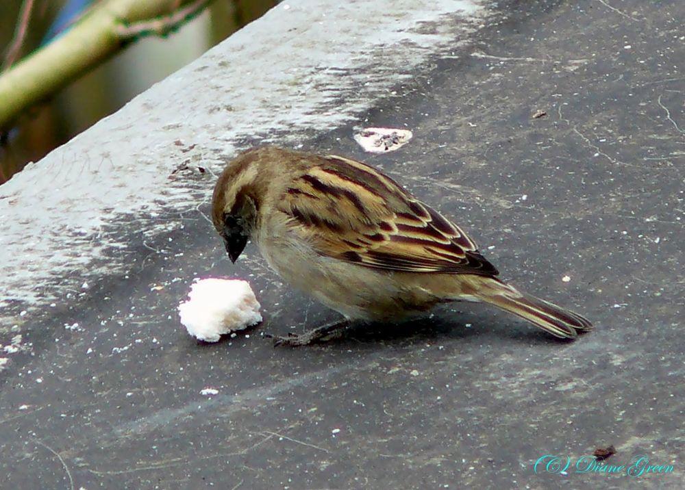 bird by Diane Green