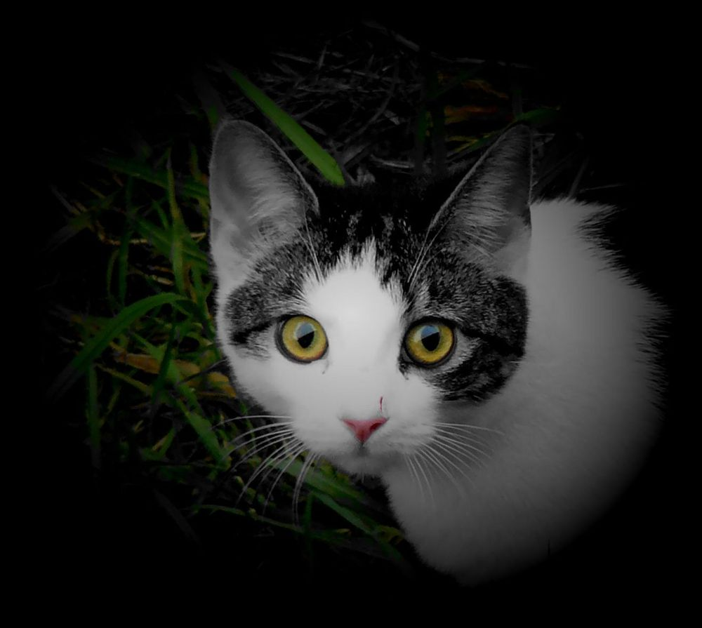 cat by Diane Green