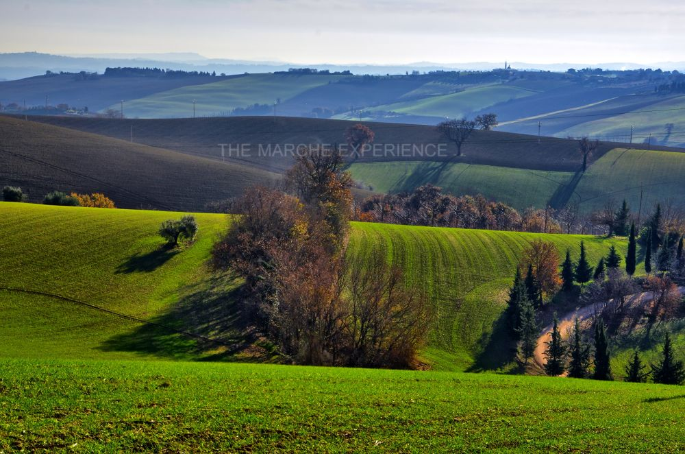 Marche by EmanueleZ