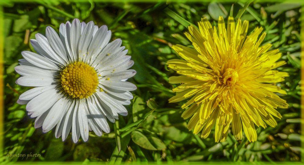 thumbnail flowers by apintogsphotos