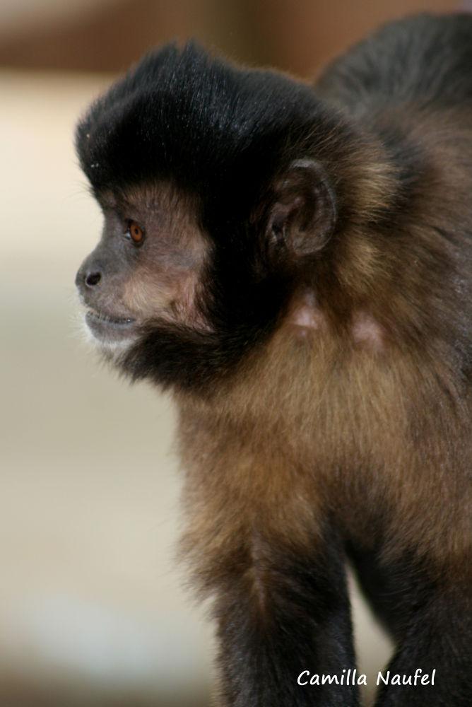 Photo in Random #macaco prego #águas da prata