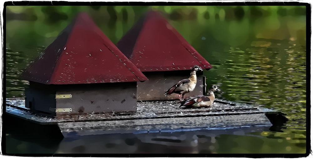 vögel by slevin