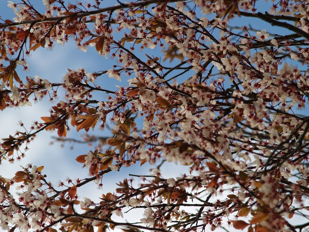Spring has sprung (2014) - 05 by Nick Hill