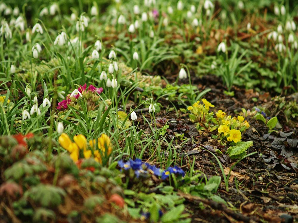 Spring Garden by Nick Hill