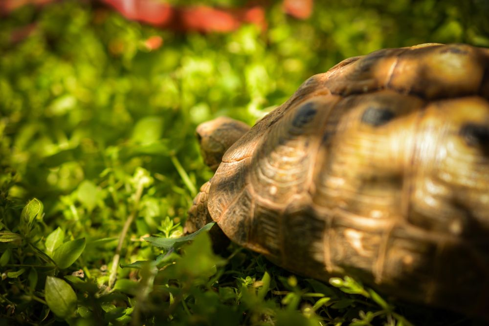 Turtle-2 by abuthwar