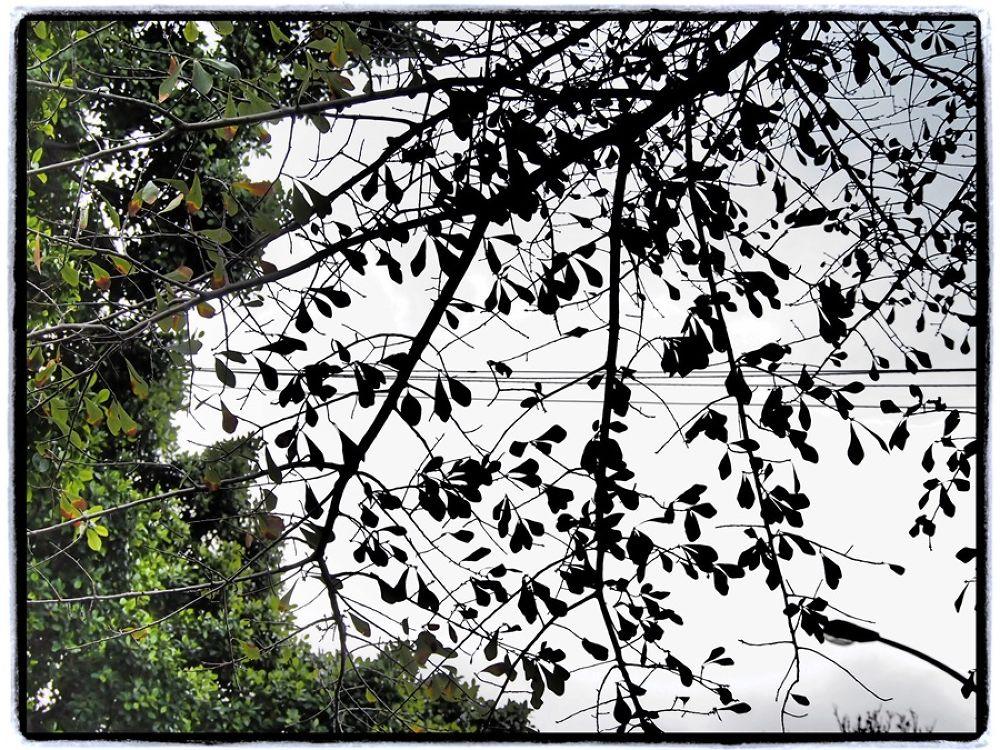 Ghost tree by Jfunk