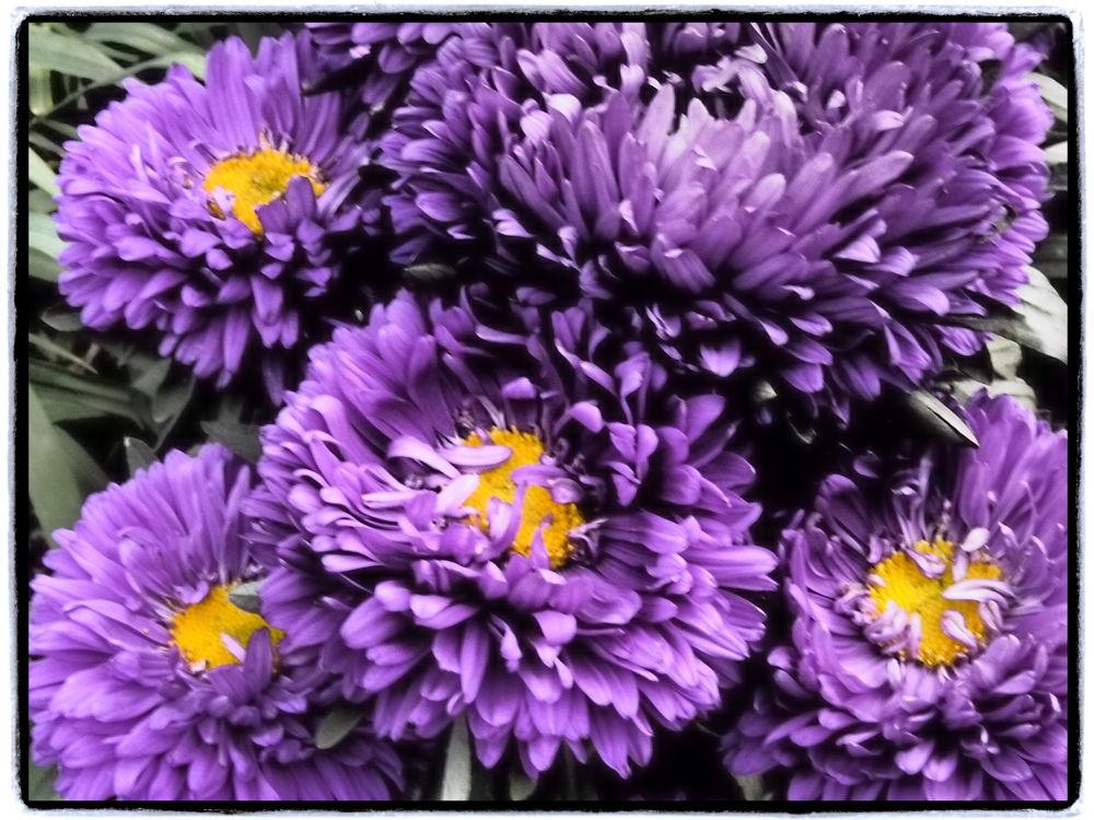 Deep purple, nicccce! by Jfunk