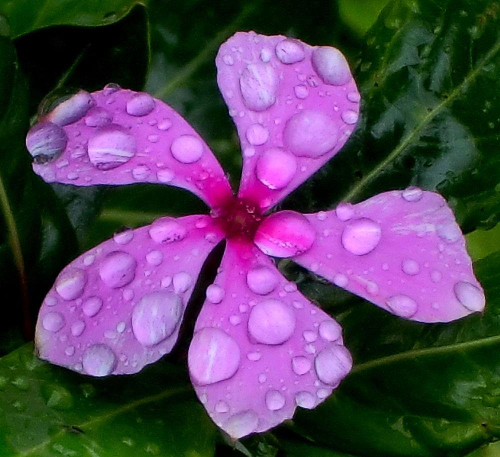 blom1 by Jfunk